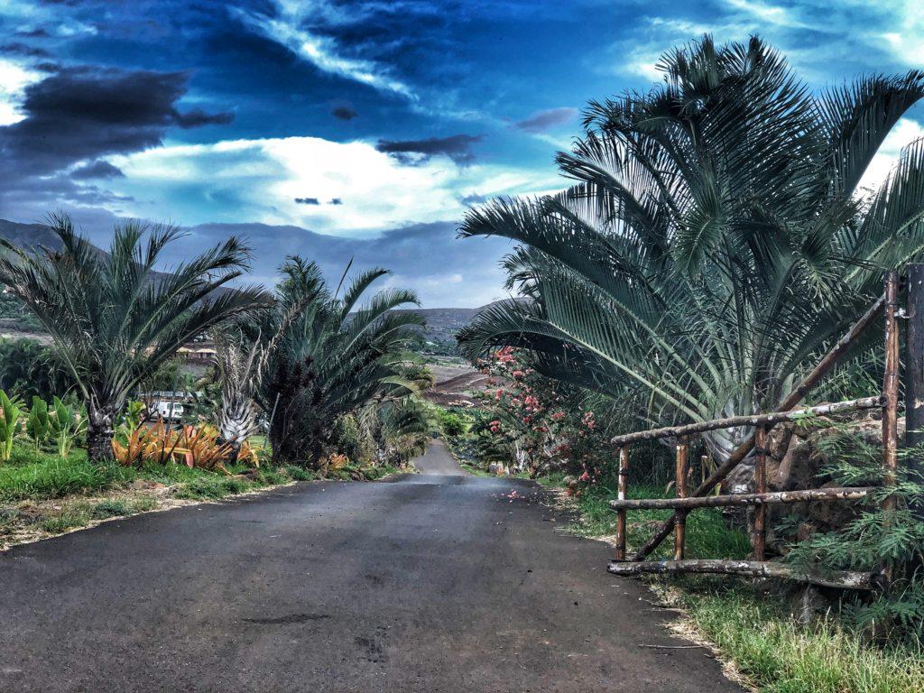 Maui Dragon Fruit Farm