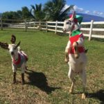 Holiday Gift Ideas Maui