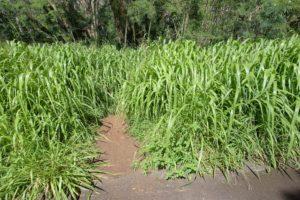 Xterra Trails at Kapalua Village Trails