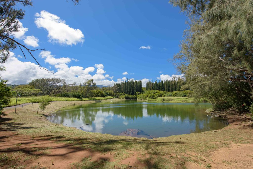 The Duck Pond at Kapalua Village Trails