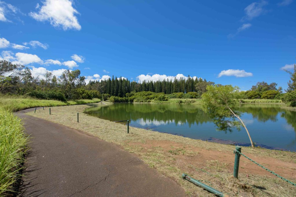 Trail by the Kapalua Village Trails Duck Pond
