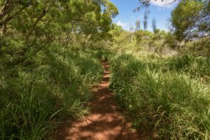 Mountain Bike Trails at Kapalua Village Trails